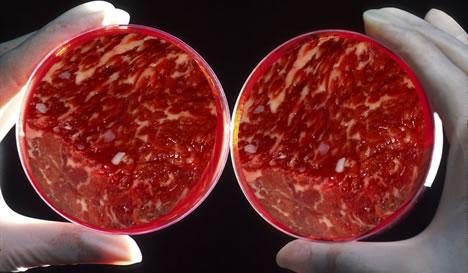 carne_laboratorio